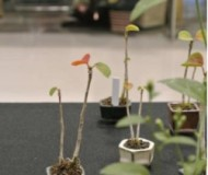 bonsai_thumb